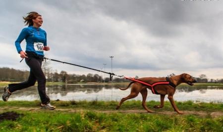 На перший забіг із собаками вже зареєструвалися півсотні житомирян