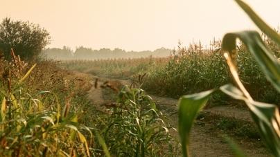 Зниклу на Житомирщині 81-річну бабусю знайшли через 4 дні у полі