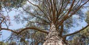 На півночі області помер лісівник, на якого впало дерево