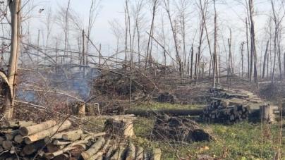 Підприємці з Новограда, які займалися контрабандою вугілля, вирізали… 7 гектарів лісу