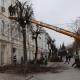 На Михайлівській біля житомирської мерії облагороджують дерева