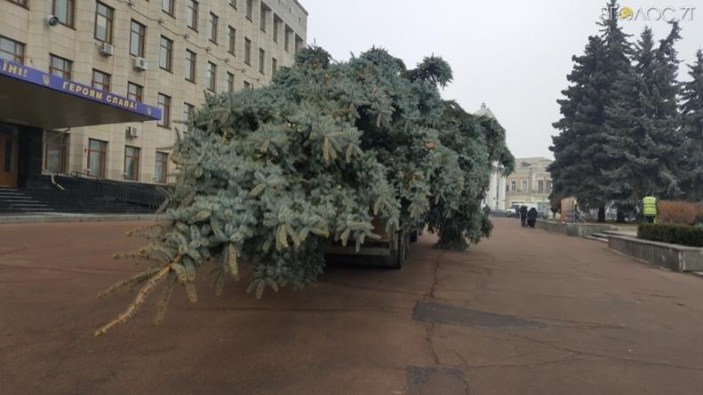 На майдані Корольова встановили головну ялинку Житомира, яку зрізали біля ліцею