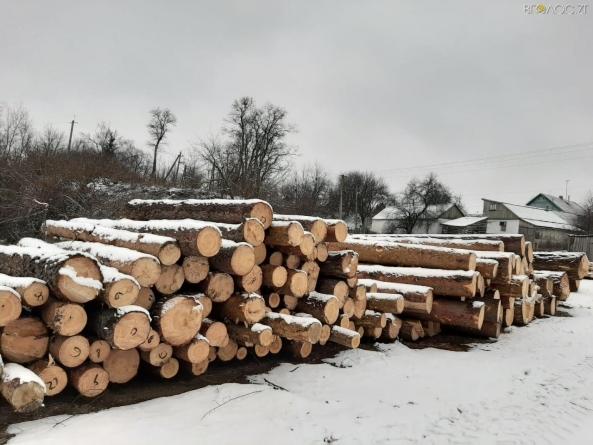 Керівники лісгоспу на Житомирщині розкрали державної деревини на 3 мільйона гривень, – СБУ
