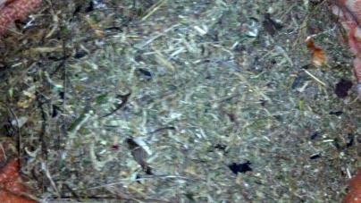 У жителя Коростишева знайшли кілограм наркотиків, які він зберігав у ковдрі