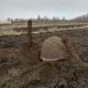 Бердичівський район: на сільських городах пошуківці знайшли останки трьох солдат