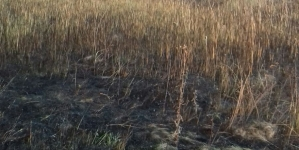 Пекельна зима: протягом доби у 8 районах області загорілися поля із минулорічною травою