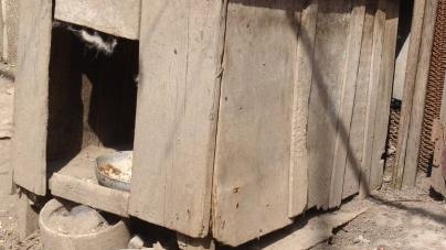 На Житомирщині поки поліція шукала 9-річного хлопчика, він спав у собачій будці