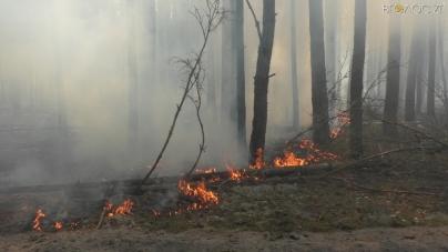 Горить ліс: на півночі області понад 300 людей, півсотні одиниць техніки та авіація борються із вогнем