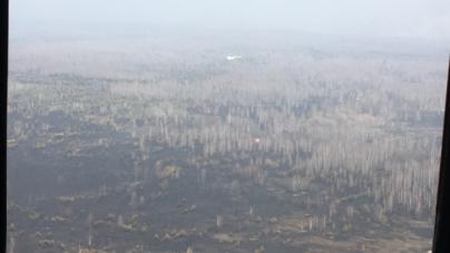 """180 гектарів лісу згоріло на півночі області: особі, яка спричинила пожежу, """"світить"""" 10 років"""