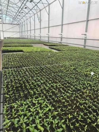 У Житомирі Поліський національний університет вирощує розсаду овочів на продаж