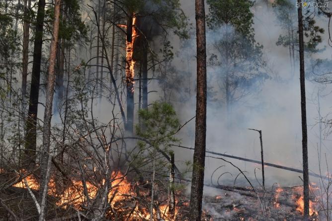 Житомирщина у вогні: 1069 людей намагаются загасити лісові пожежі