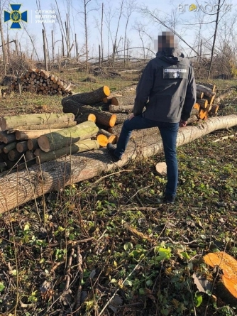 СБУ викрила посадовця лісгоспу, який організував незаконні вирубки та продаж державної деревини