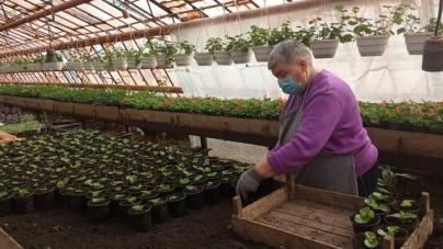 «Зеленбуд» планує висадити у Житомирі 75 тисяч квітів