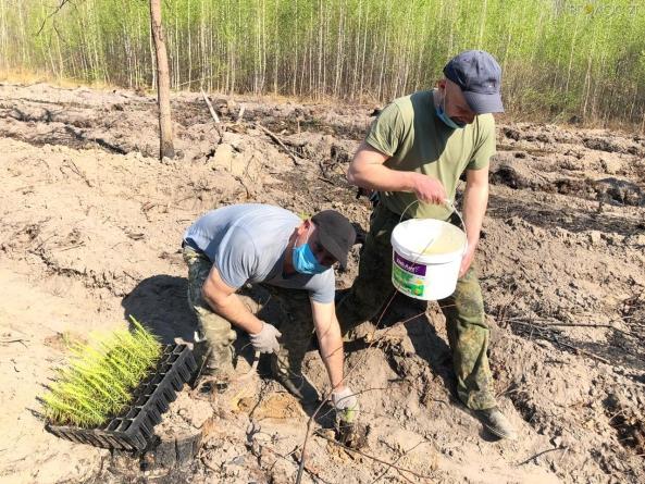 У Житомирському лісгоспі уже відновлюють ліси, пошкоджені весняними пожежами
