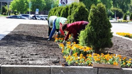 Житомирські комунальники висаджують квіти на майдані Корольова (ФОТО)