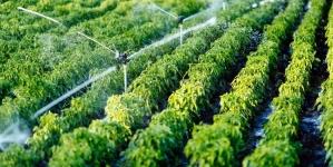 Житомиряни знову не платитимуть гроші за полив присадибних ділянок