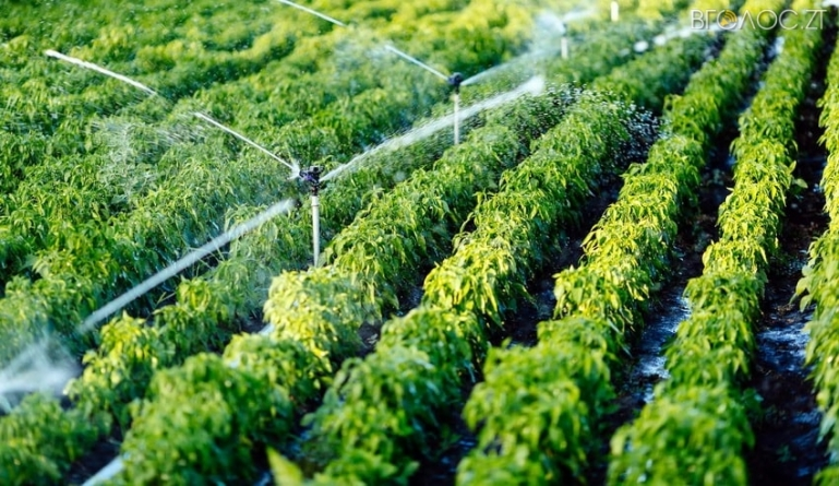 Житомиряни не платитимуть водоканалу за полив грядок коли дощитиме