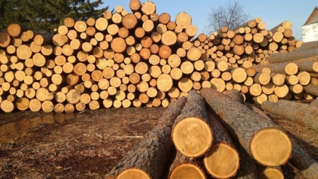 Депутати облради проситимуть Верховну Раду дозволити експортувати ліс