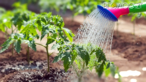 Житомирянам не нараховуватимуть плату за полив городини у липні