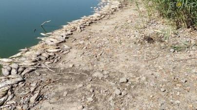 На Житомирщині знову зафіксували масову загибель риби