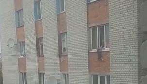 Поліція розслідує жорстоке поводження з твариною: житомирянка виштовхувала цуценя з вікна сьомого поверху