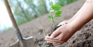 Лісівники області висадять понад 200 тисяч дерев