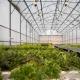 """На території Поліського національного університету працює """"розумна"""" теплиця, де вирощують органічну зелень та квіти"""