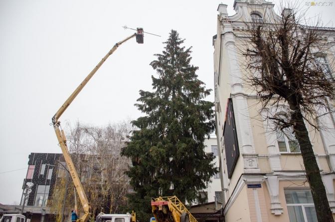 У Житомирі почали наряджати головну ялинку міста (ФОТО)