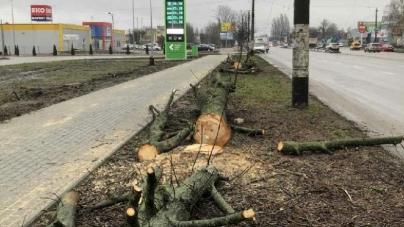 Житомирська АЗС на проспекті Незалежності самовільно зрізала дерева