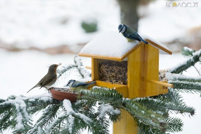 Управління культури Житомирської міськради оголосило конкурс годівниць для птахів