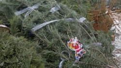 Житомирян закликають здавати новорічні ялинки на утилізацію
