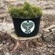 В Житомирській області висадили майже 920 тисяч дерев