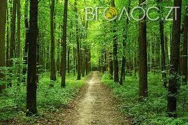 На Житомирщині 25-річний киянин підрізав селянина і сховався в лісі
