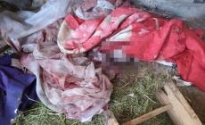 На Житомирщині після самостійних пологів до лікарні потрапила жінка. Немовля знайшли мертвим